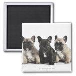 Three Pedigree Puppies 2 Inch Square Magnet