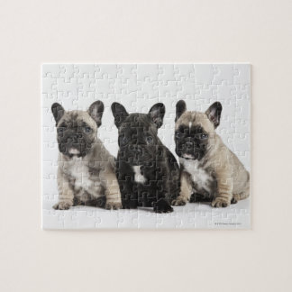 Three Pedigree Puppies Jigsaw Puzzle