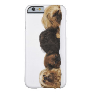 Three Pekingese dogs and single Pug lying down Barely There iPhone 6 Case