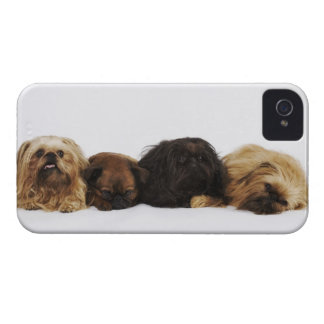 Three Pekingese dogs and single Pug lying down iPhone 4 Case