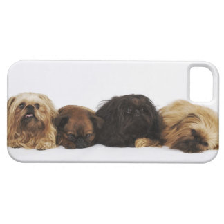 Three Pekingese dogs and single Pug lying down iPhone SE/5/5s Case