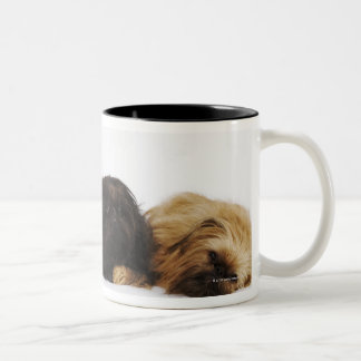 Three Pekingese dogs and single Pug lying down Mugs
