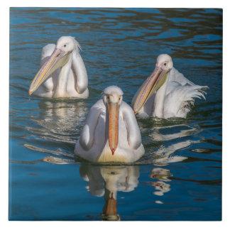 Three pelicans ceramic photo tile