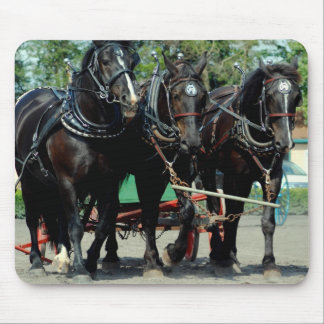 three percherons abreast mouse pads