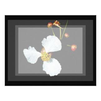 Three petaled white flower black background letterhead