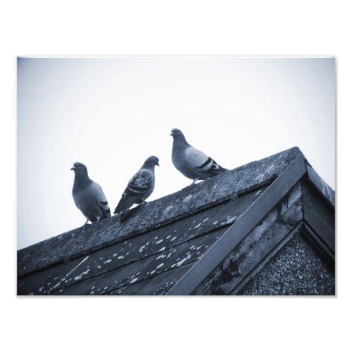 Three Pigeons on a Roof Photo Print