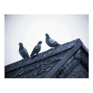 Three Pigeons on a Roof Postcard