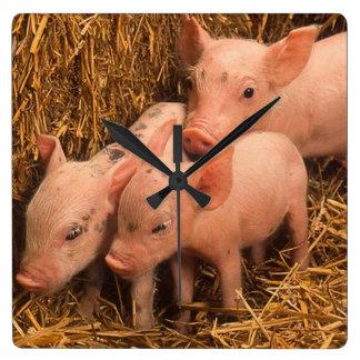 three piglets square wall clock