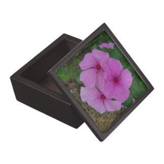 Three Pink Madagascar Periwinkles Premium Jewelry Box