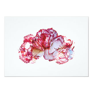 Three Pink-Tipped Carnations Card