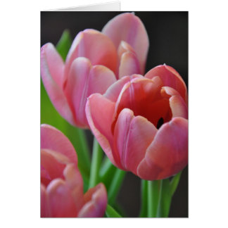 Three Pink Tulips Card