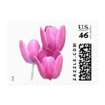 Three Pink Tulips Postage Stamp