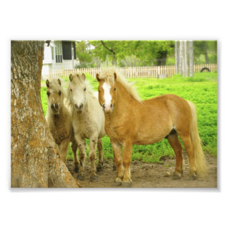 Three Ponies Horse Farm Photo Print