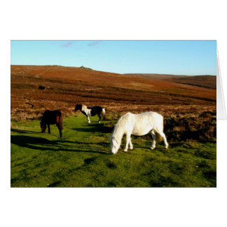 Three ponies on Dartmoor Cards