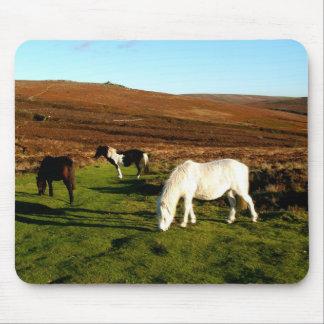 Three ponies on Dartmoor Mouse Pad