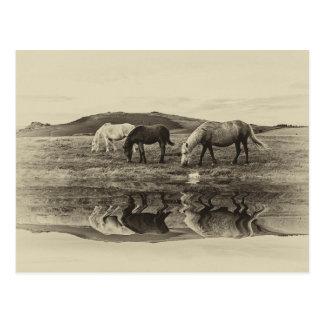 Three pony`s postcard