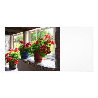 Three Pots of Geraniums on Windowsill Card