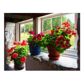 Three Pots of Geraniums on Windowsill Postcard