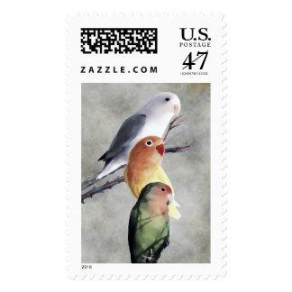 Three Pretty and Cute Lovebirds Postage