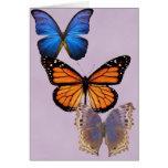 Three Pretty Butterflies Card