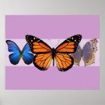 Three Pretty Butterflies Print
