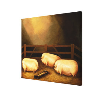 Three Prize Pigs outside a Sty Canvas Print