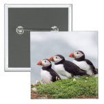 Three Puffins Pin