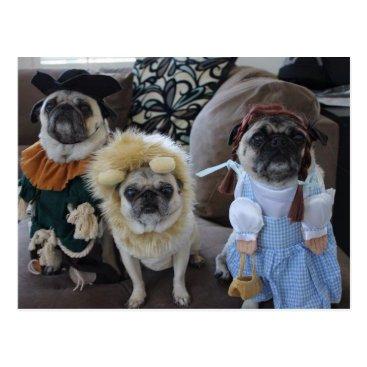 Halloween Themed Three Pugs dressed for Halloween Postcard