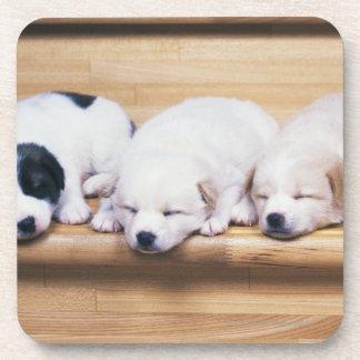 Three Puppies Coaster