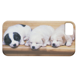 Three Puppies iPhone SE/5/5s Case
