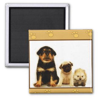 Three puppies magnet