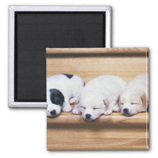 Three Puppies Magnets