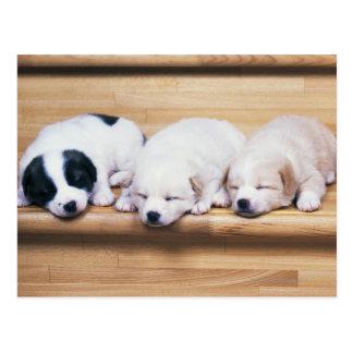 Three Puppies Postcard