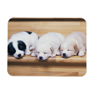 Three Puppies Rectangular Magnets