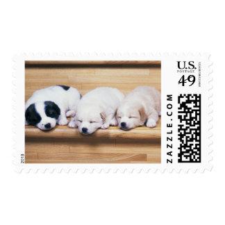 Three Puppies Stamp