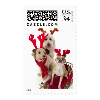 Three puppy dogs sitting at Christmas time Postage Stamp