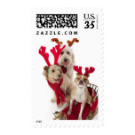 Three puppy dogs sitting at Christmas time Stamps