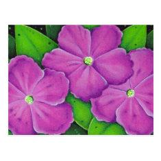 Three Purple Flowers Postcard