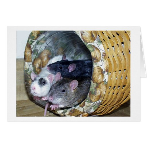 Three Rats in a Basket Cards
