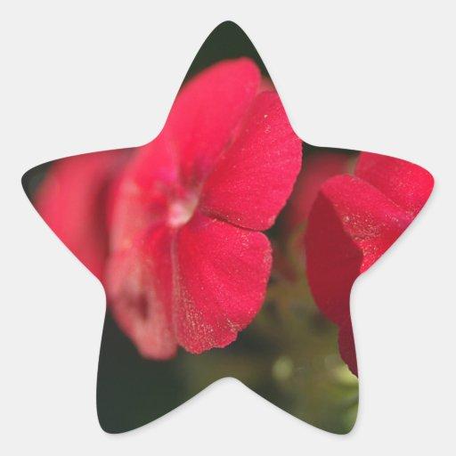 Three red flowers star stickers