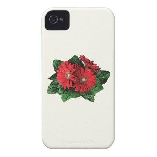 Three Red Gerbera Daisies iPhone 4 Cases