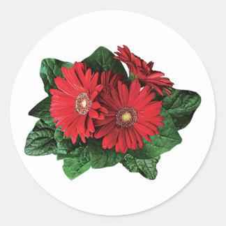 Three Red Gerbera Daisies Sticker