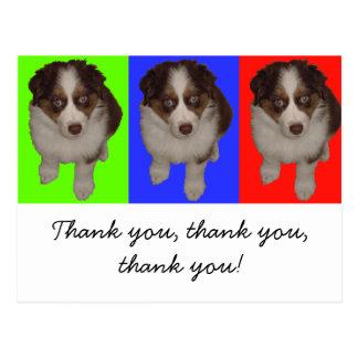 Three Red Tri Aussie Puppies Post Cards