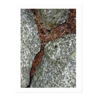 Three Rocks Dusted with Hemlock Needles Postcard
