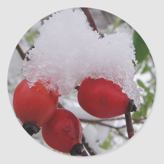 Three rosehips with snow classic round sticker