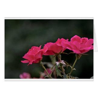 Three Roses Card