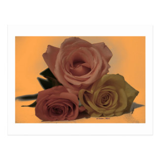 Three Roses on a pale orange background Post Card