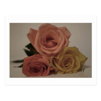 Three roses, pale colored post card