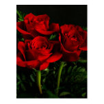 Three Roses Postcard