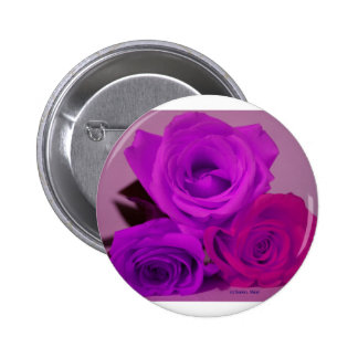 Three roses, tinted purple on a purple back pinback buttons
